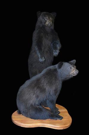 BLACK BEAR PAIR.JPG