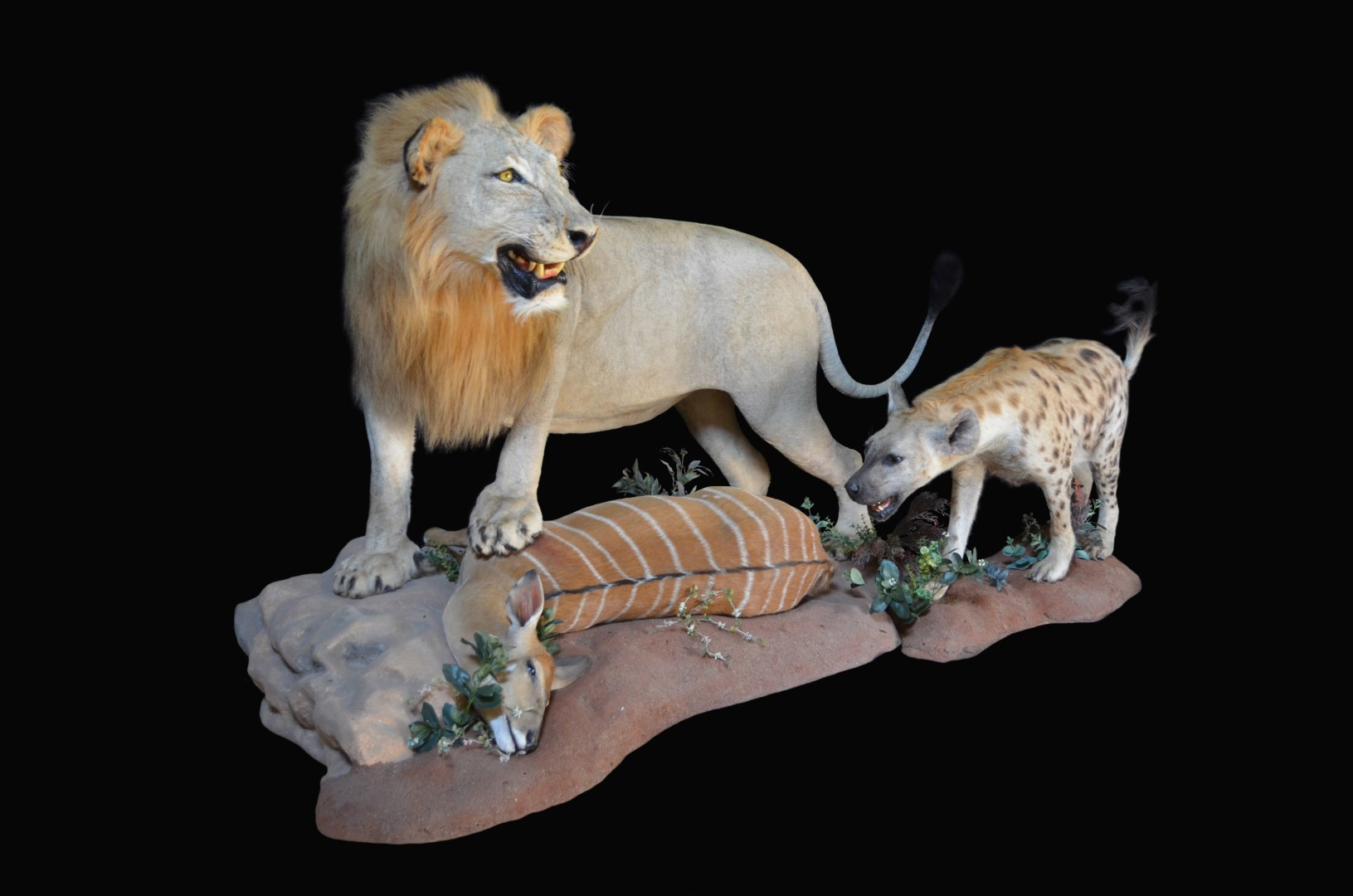 LION&HYENAKILL.jpg
