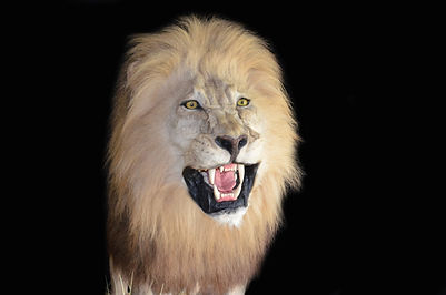 LION RUN3.jpg