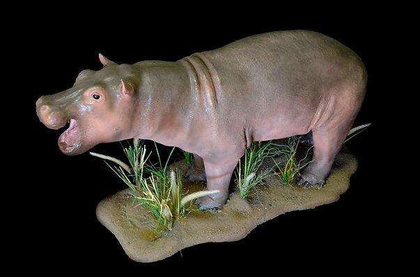 HIPPO CALF.JPG