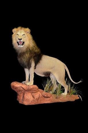 LION FULL MNT UPRIGHT.JPG