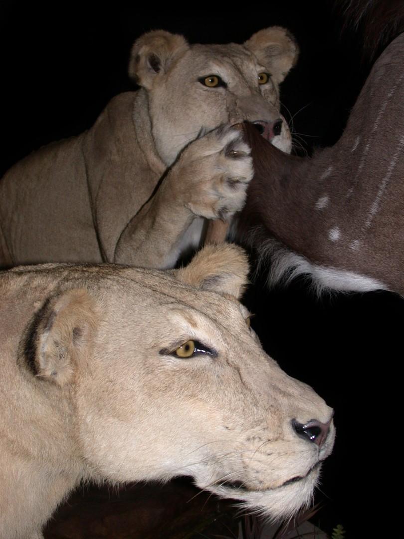 lion duo2.JPG