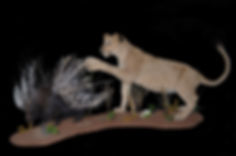 LION CUB WITH PORCUPINE2.JPG