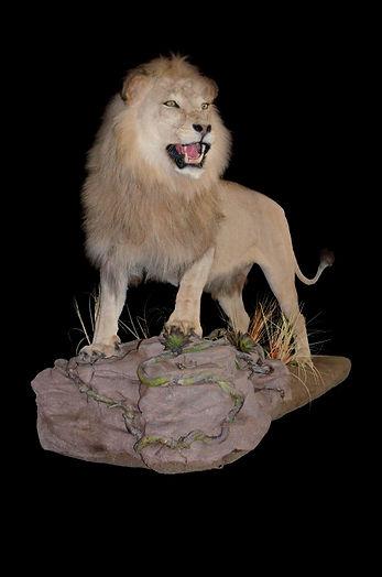 LION ON WALL BASE.JPG