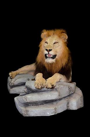 LION LAYING ON ROCK.JPG