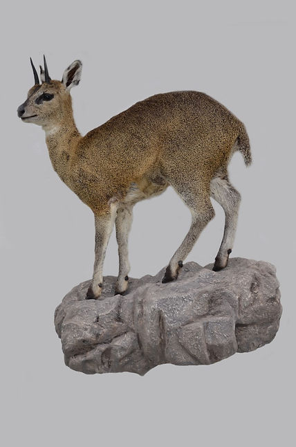 KLIPSPRINGER WALL BASE.jpg