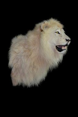 LION WHITE SHLDR.jpg