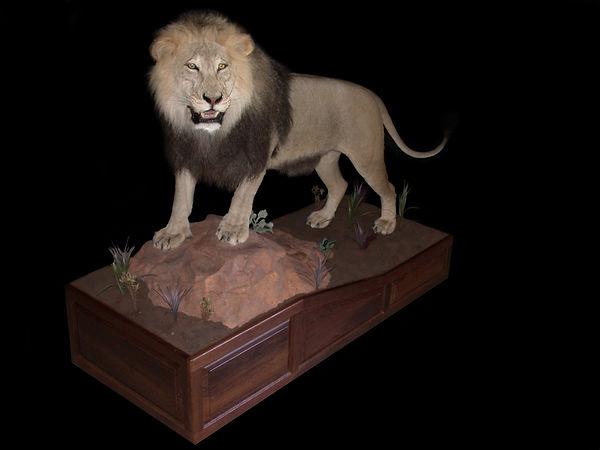 lion black.JPG