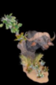 BUFFALO TREE PED.JPG