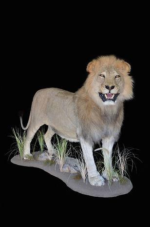 LION HEAD UP.JPG