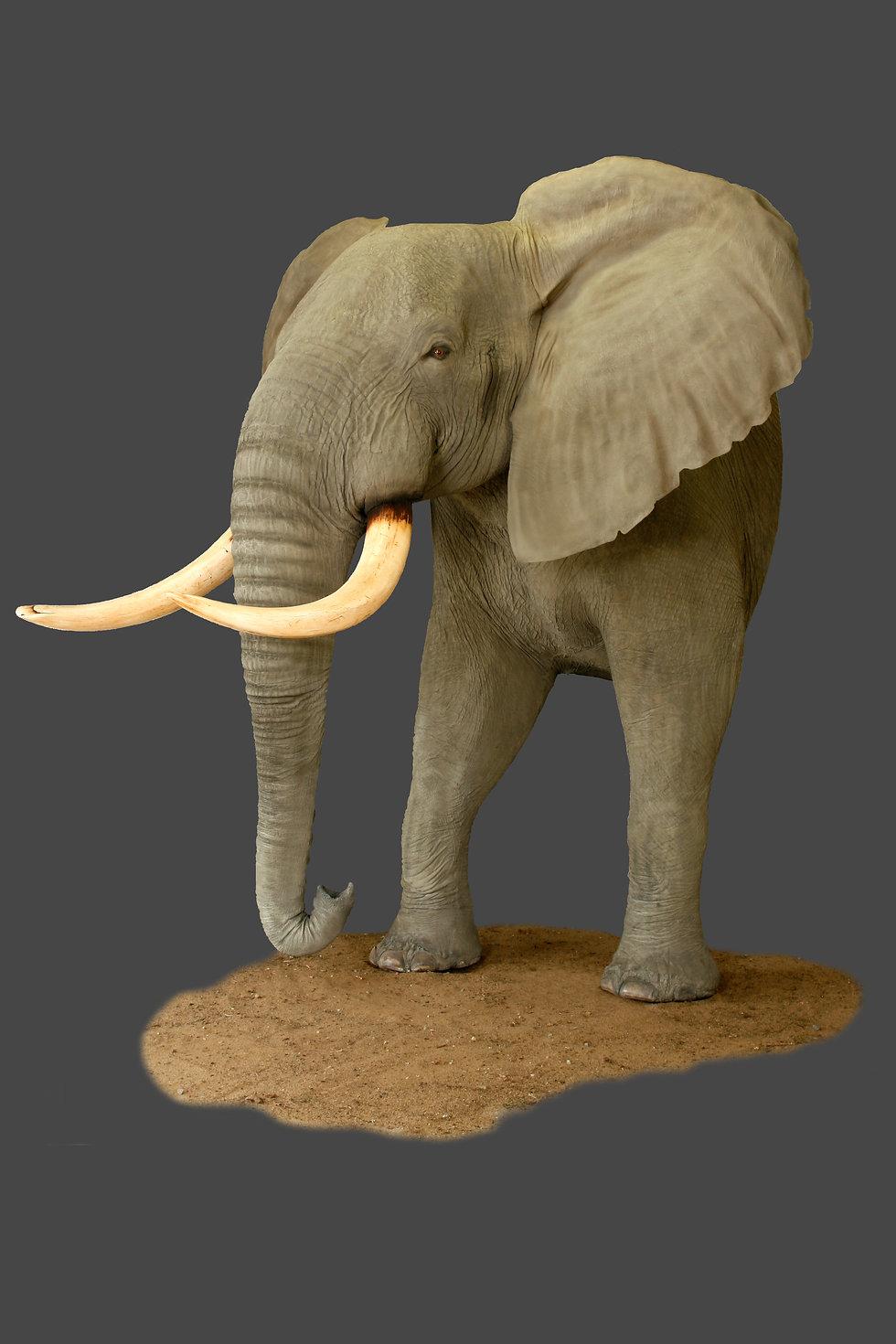 elephantsvein.JPG