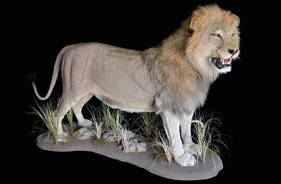 LION FULL MNT HEAD UP.JPG