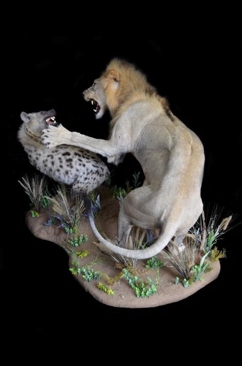 LION HYENAACTMNT3