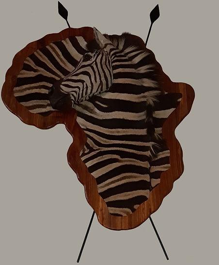 ZEBRA SHLDR ON AFRICA SHIELD.jpg