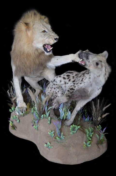 LION HYENA ACTMNT