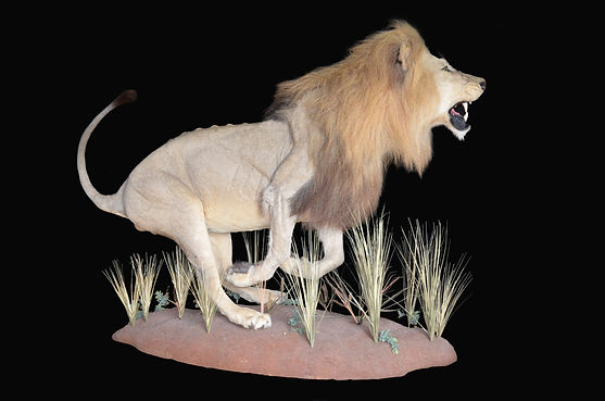 LION RUN.jpg