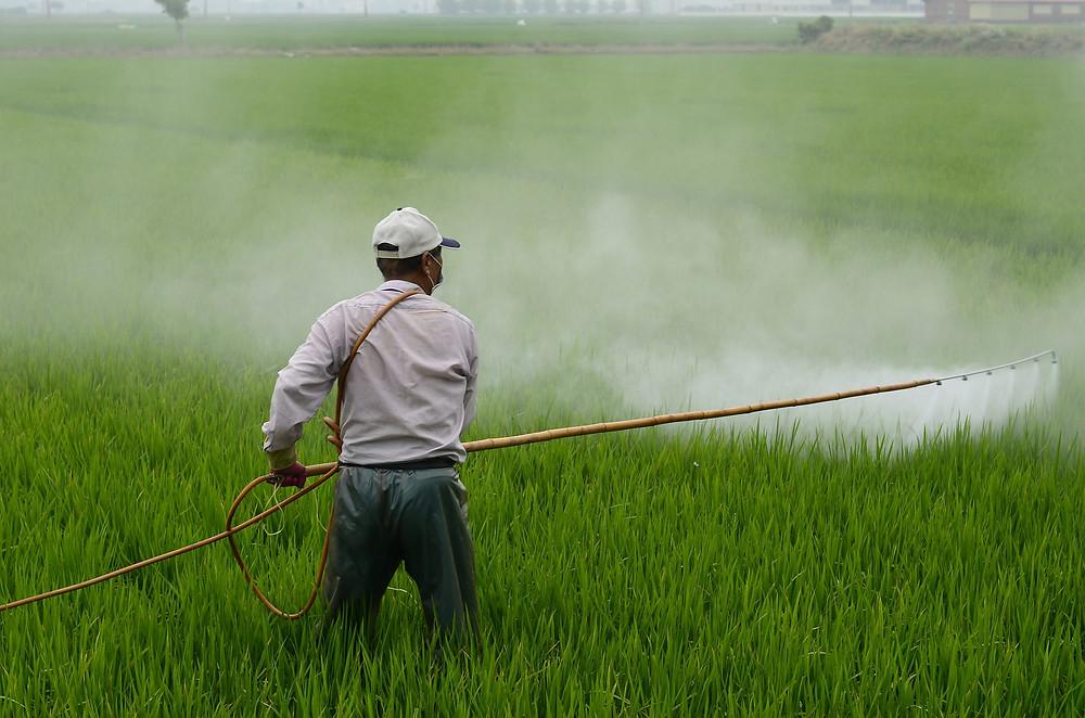 spinach pesticides