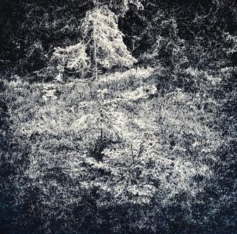 LES I. / perokresba na papíře 30x30cm / 2018     Forest I. / ink drawing on paper 30x30cm / 2018