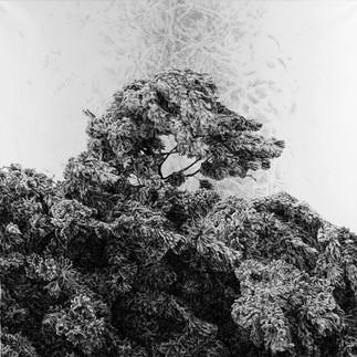 NEPATRNÉ SVĚTY / tuš na plátně 130x130cm / 2020      Invisible worlds / ink on canvas 130x130cm / 2020