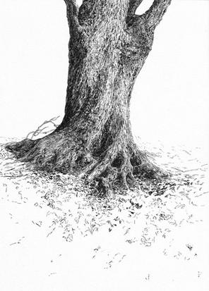 STROM / perokresba na papíře 21x30cm / 2021       Tree / ink drawing on paper 21x30cm / 2021