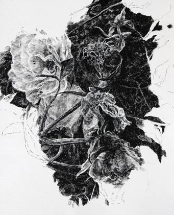 RŮŽE / perokresba na papíře 25x30cm / 2020      Roses / ink drawing on paper 25x30cm / 2020