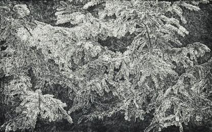 V PŘÍTMÍ LESA / čárový lept 80x50cm / 2017  ve sbírkách Muzea umění v Olomouci      In the Shadows of the Forest / etching 80x50cm / 2017  in the collections of the Art Museum in Olomouc