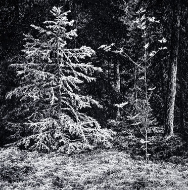 LES II. / perokresba na papíře 30x30cm / 2019  soukromá sbírka USA     Forest II. / ink drawings on paper 30x30cm / 2019  private collection in USA