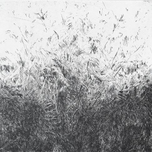 ŠUMĚNÍ LESA I. / čárový lept 30x30cm / 2014     The Forest noise I. / etching 30x30cm / 2014