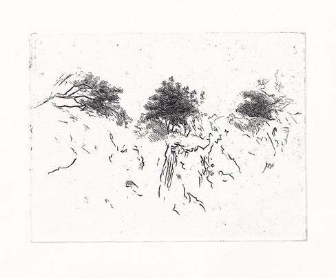 V KORUNÁCH / čárový lept 19,5x15cm / 2015    In the tree crown / etching 19,5x15cm / 2015