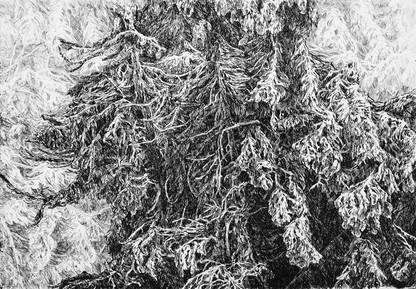 VRBENSKÝ LES / čárový lept 30x20cm / 2014     Forest in Vrbno / etching 30x20cm / 2014