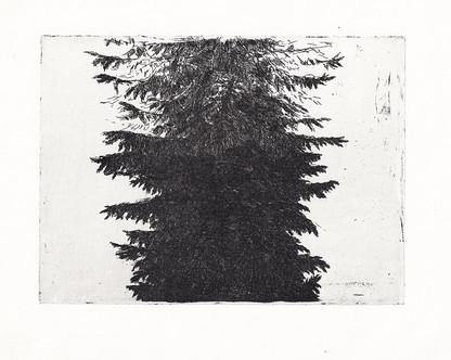 STROM / čárový lept 19,5x15cm / 2013    Tree / etching 19,5x15cm / 2013