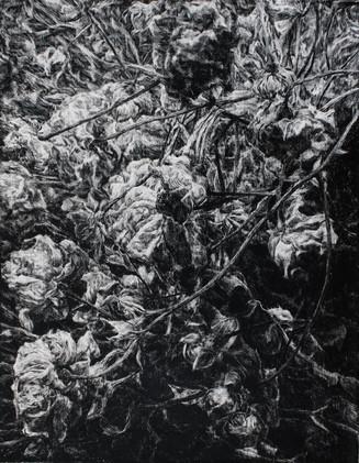 RŮŽE II. / tuš na plátně 50x65cm / 2020       Roses II. / ink on canvas 50x65cm / 2020