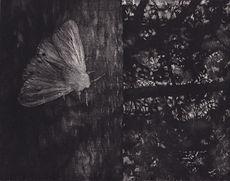 nocni-motyl.jpg