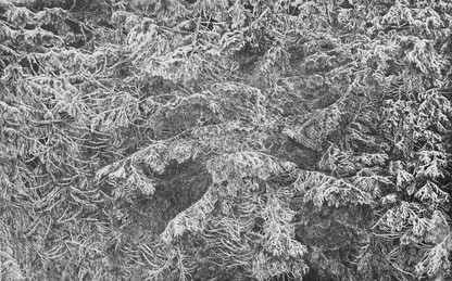 JE-LI TMA KLIDNÁ, POHNE SE JAS... /čárový lept 85x55cm / 2014      If the dark is quiet the brightness moves / etching 85x55cm / 2014