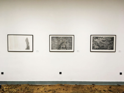 Les - spolu s Terezou Eisner / galerie Důl Michal v Ostravě / 2018      Forest - Tereza Eisner, Lenka Falušiová / gallery in the coal Mine Michal in Ostrava / 2018