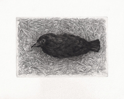 PTÁČEK / suchá jehla, lept 15x10cm / 2013       Bird / drypoint and etching 15x10cm / 2013