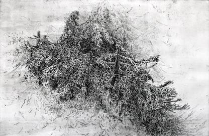 HORSKÉ STROMY / čárový lept 60x40cm / 2021       Mountain trees / etching 60x40cm / 2021