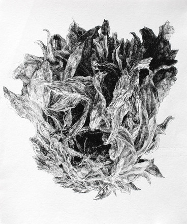 KVĚT / perokresba na papíře 30x25cm / 2020       Flower / ink drawing on paper 30x25cm / 2020