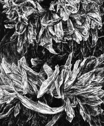 KVĚTY / perokresba na papíře 30x25cm / 2020       Flowers / ink drawing on paper 30x25cm / 2020