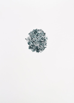 LESNÍ KVĚT / perokresba na papíře 65x50cm / 2018  soukromá sbírka Švýcarsko     The Forest Flower / ink drawing on paper 65x50cm / 2018  private collection in Switzerland