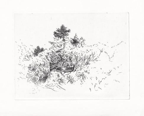 KEŘE / čárový lept 19,5x15cm / 2016    Bushes / etching 19,5x15cm / 2016