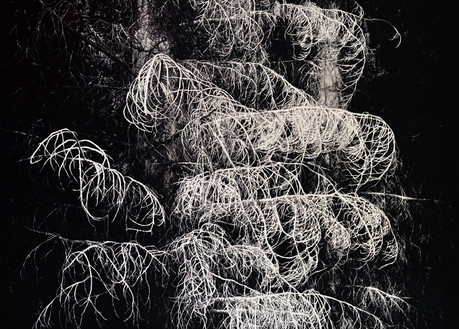 NOCTURNO / tuš na plátně 100x70cm / 2018     Nocturne / ink on canvas 100x70cm / 2018