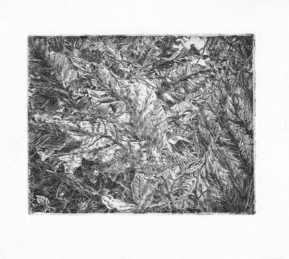 BOTANICKÁ ZAHRADA I. / čárový lept 12x10cm / 2017     Botanic Garden I. / etchings 12x10cm / 2017