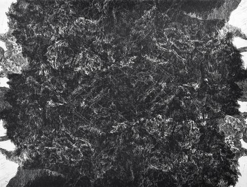 UVNITŘ STROMU / čárový lept 40x30cm / 2015     Inside the tree / etching 40x30cm / 2015