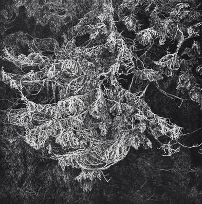 STRÁŽCE LESA / čárový lept 50x50cm / 2014  ve sbírkách Městské knihovny v Praze (artotéka Opatov)     Guardian of the Forest  / etching 50x50cm / 2014  in the collections of the Municipal Library in Prague