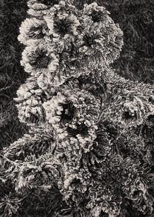 JINÉ SVĚTY I. / tuš na plátně 140x100cm / 2020       Other worlds I. / ink on canvas 140x100cm / 2020