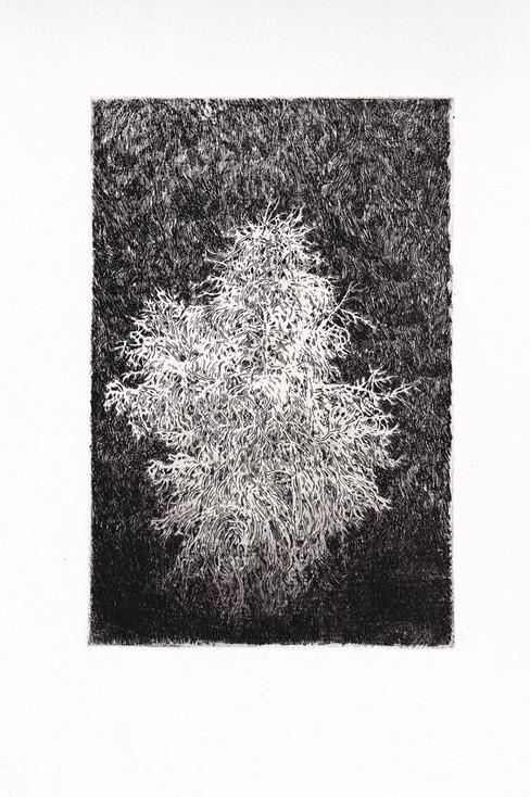 BÍLÝ STROM / čárový lept 15x10cm / 2018      White tree / etching 15x10cm / 2018