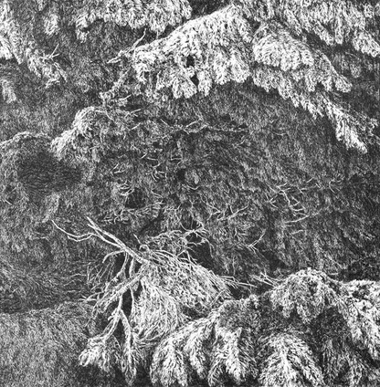 STEZKA TICHA / čárový lept 50x50cm / 2014     Path of Silence / etching 50x50cm / 2014