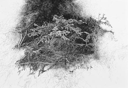 VE VĚTVÍCH STROMU / perokresba na papíře 100x70cm / 2017  soukromá sbírka Švýcarsko     In the branches of a tree / ink drawing on paper 100x70cm / 2017  private collection in Switzerland