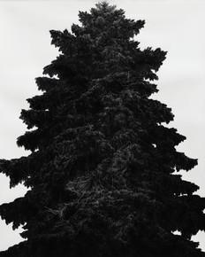 STRÁŽCE LESA / tuš na papíře 130x110cm / 2019     Guardian of the Forest / ink drawing on paper 130x110cm / 2019